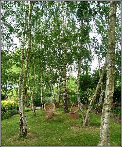 salon de jardin vers les bouleaux
