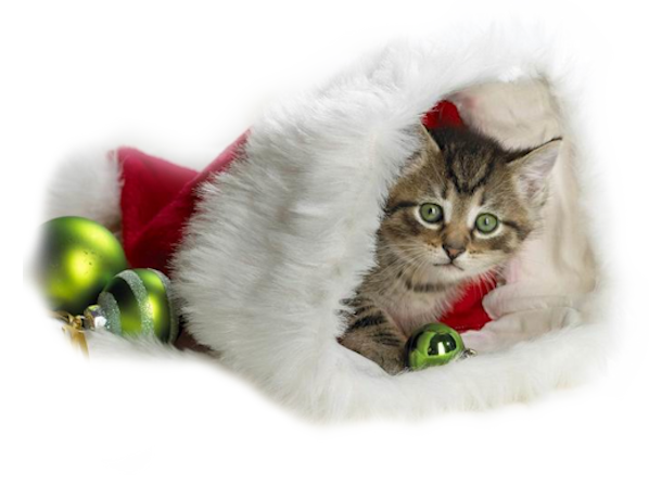Tubes animaux Noël 2
