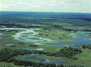 pantanal9