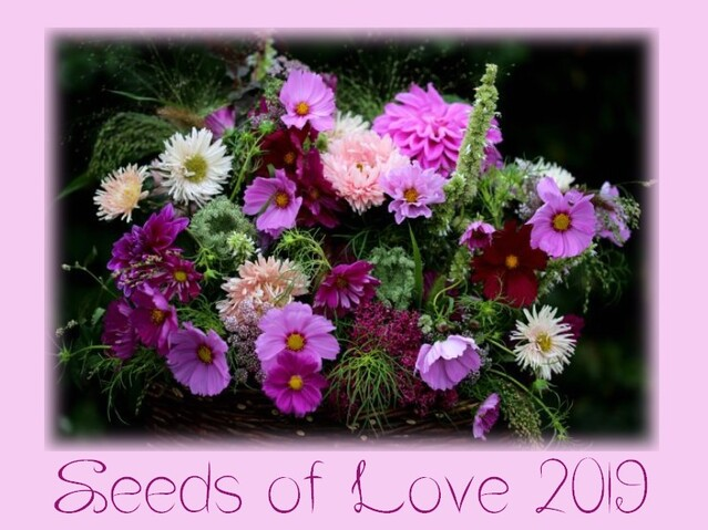 Seeds of Love 2018 - J-6 : quelques consignes importantes