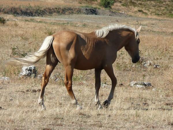 couleurs-ete_10_chevaux.JPG