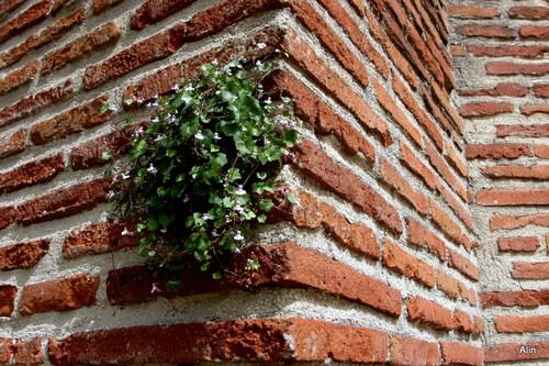 Des fleurs sur un mur !