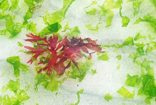 Jeux d'algues!
