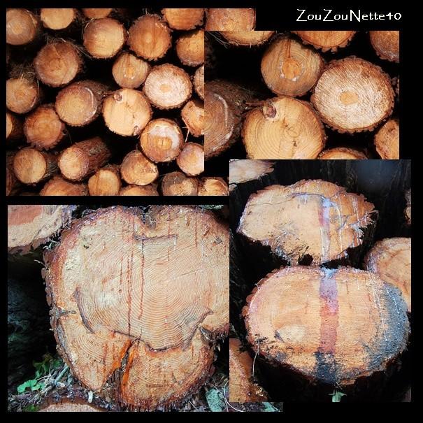 KLAUS-DEUX-ANS-APRES-30-01-2011.-N--3-.jpg