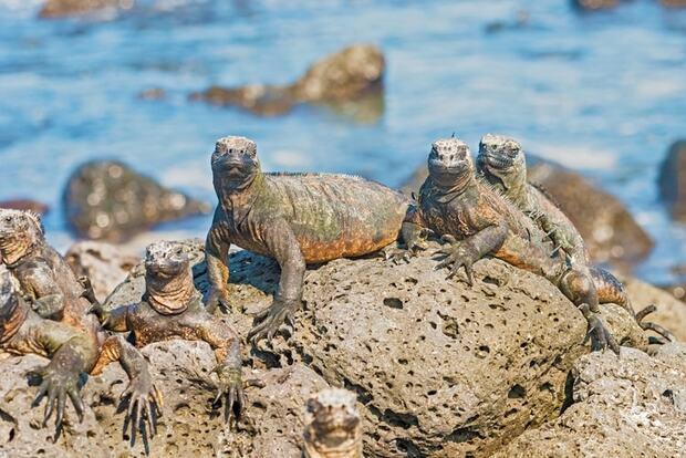 L'archipel des Galapagos