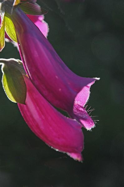 Fleurs-12-5446.jpg