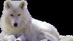 PNG képek: Állatok /Erdei, mezei/