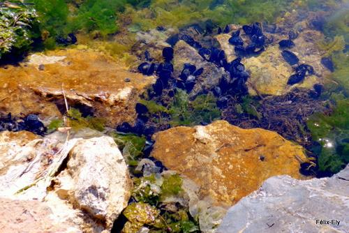 Promenade au bord du lac marin de Salses (1)