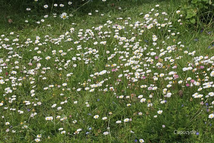 Au jardin de mai, le tour des touffes ...