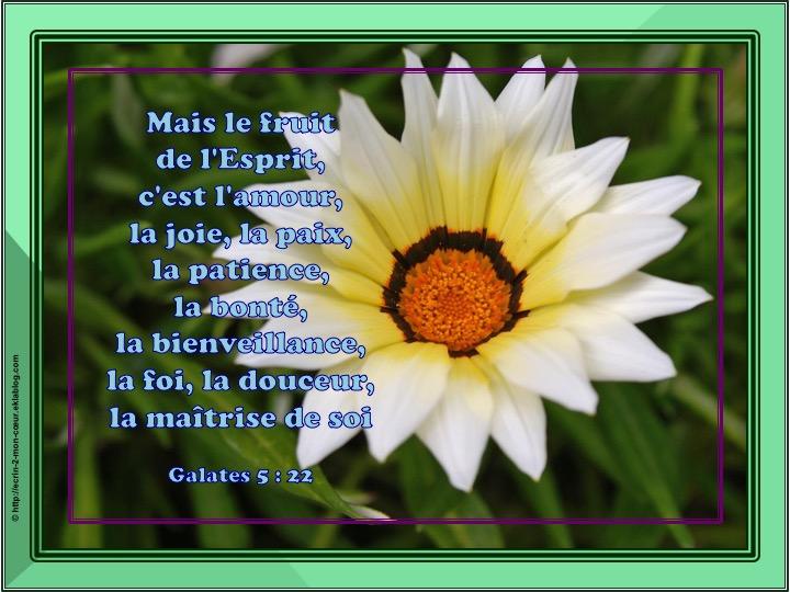 Le fruit de l'Esprit - Galates 5 : 22