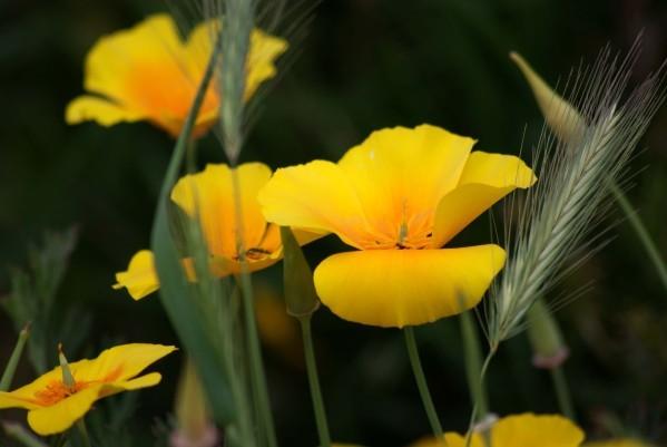 Fleur Mydo 4917