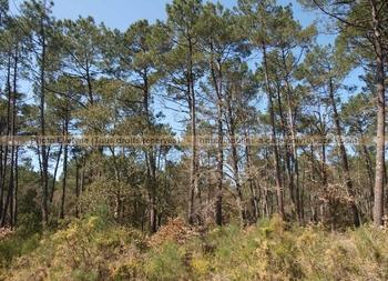 ForêtLandaise30Mars2012 (6)