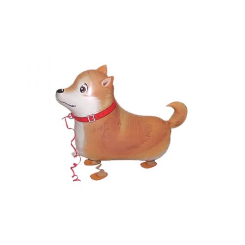 Shibas Inus gentils petits chiens