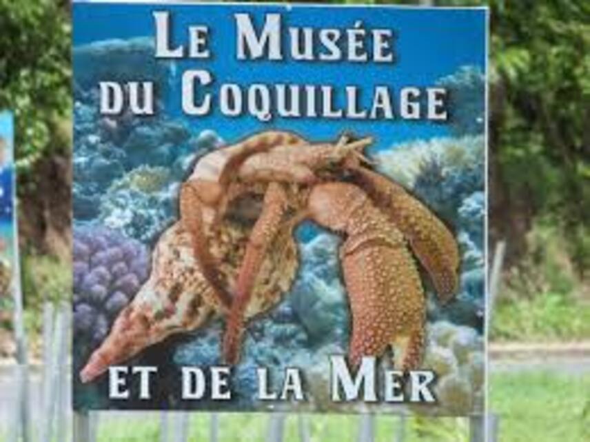 """Résultat de recherche d'images pour """"MUS2E DU COQUILLAGE diamant martinique"""""""