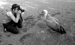 edithb photographiant un jeune vautour