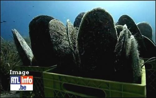 -Des moules géantes dans le Concordia