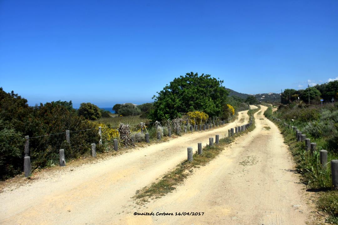 Sentiers de Corbara - Corse