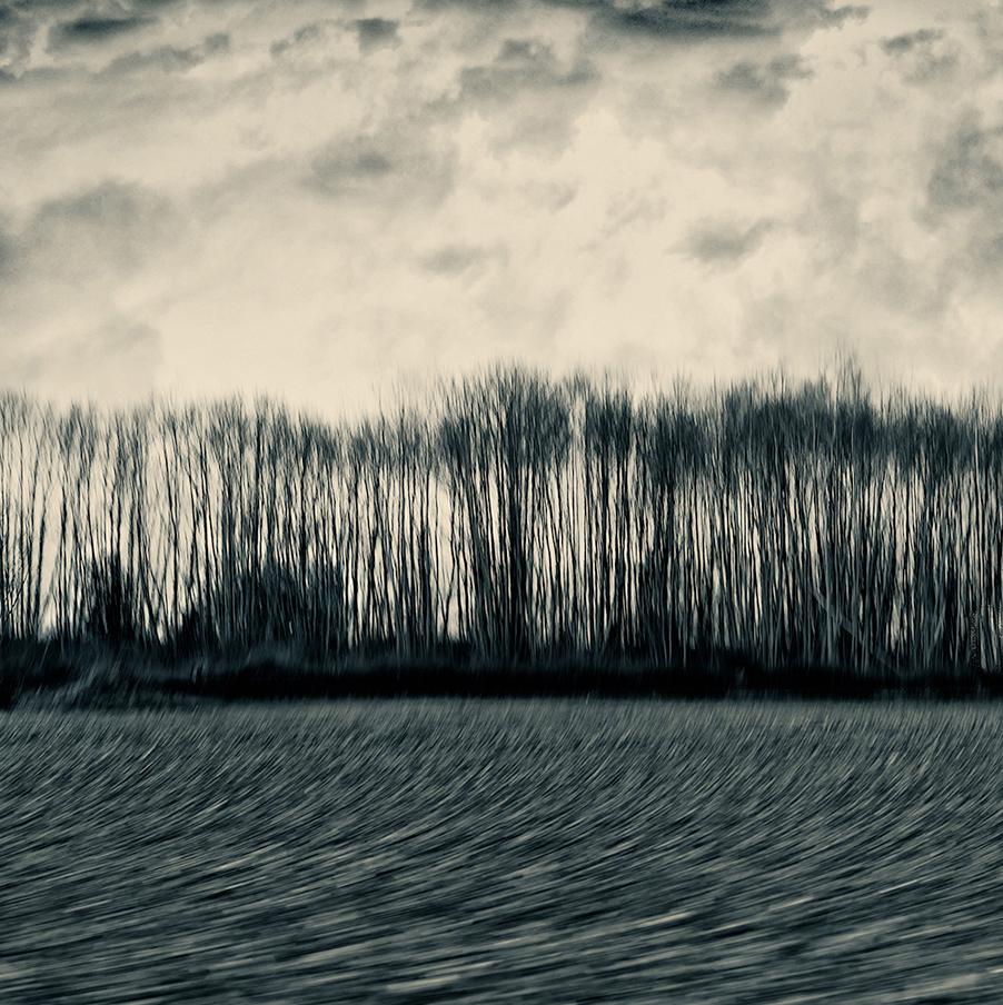 arbres...