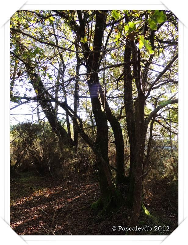 Cueillette de champignons sur la route de Lacanau - 3/4