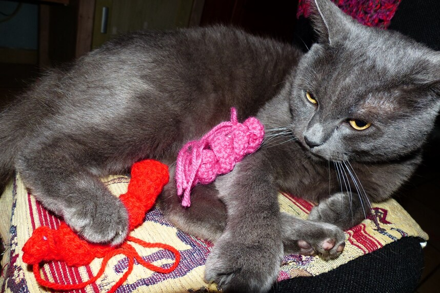 Il aime mes aiguilles à tricoter...