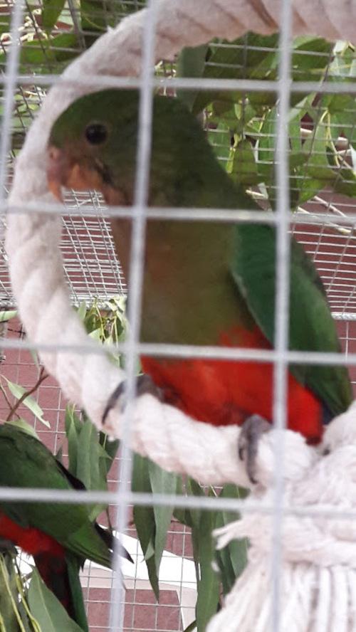 Expo d'oiseaux 2