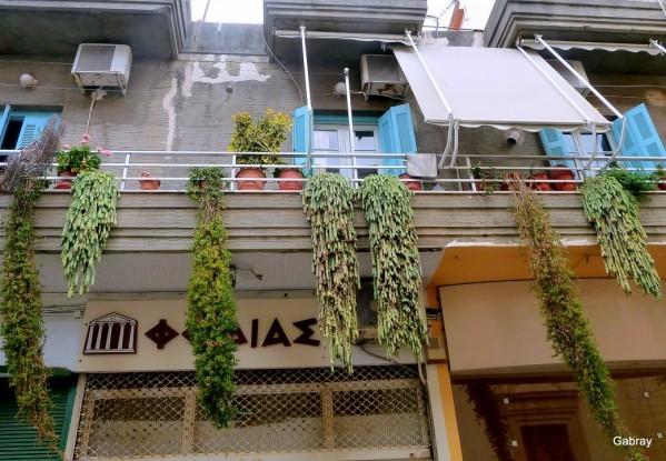 v07 - Balcon des plantes