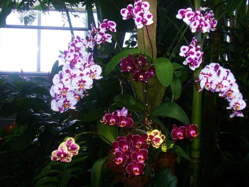 Jardin-du-monde-orchid--es-XI.jpg