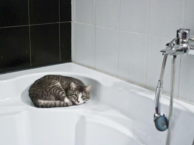Un chat piégé derrière des carreaux