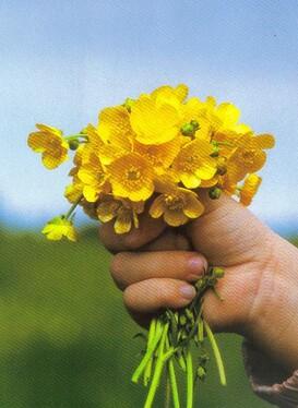 http://iletaitunefoi.unblog.fr/files/2008/10/fleur.jpg