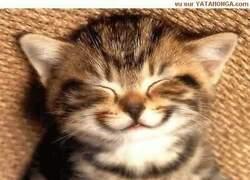 Pour vous refaire sourire !