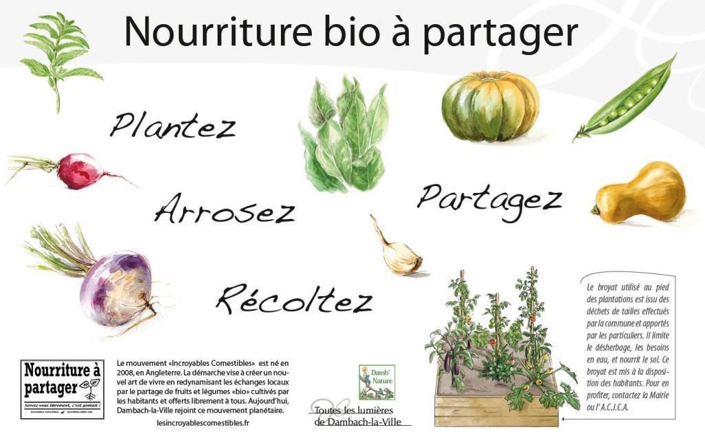 Dambach-la-Ville rejoint le mouvement des Incroyables Comestibles