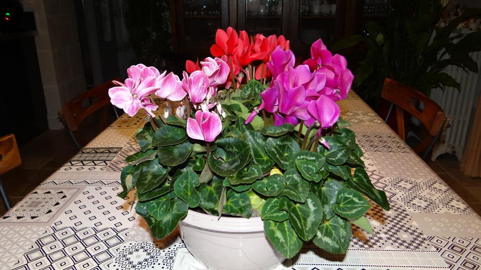 Noyers (sur Serein) + les fleurs de la fin de Semaine