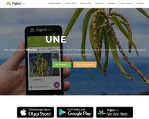 Application Pl@ntNet pour reconnaître des plantes des calanques