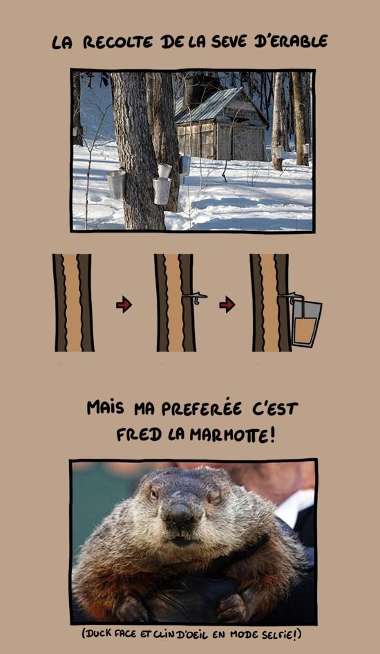 Et la marmotte, elle met le chocolat . . .