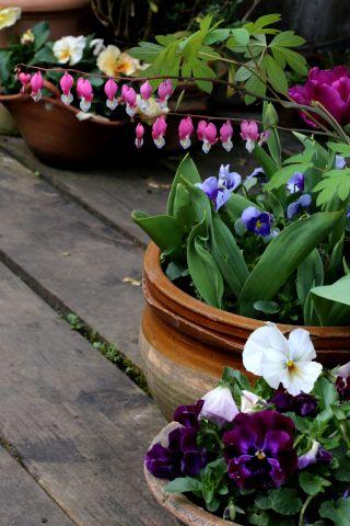 Cultiver en pots : rien de plus simple mais...