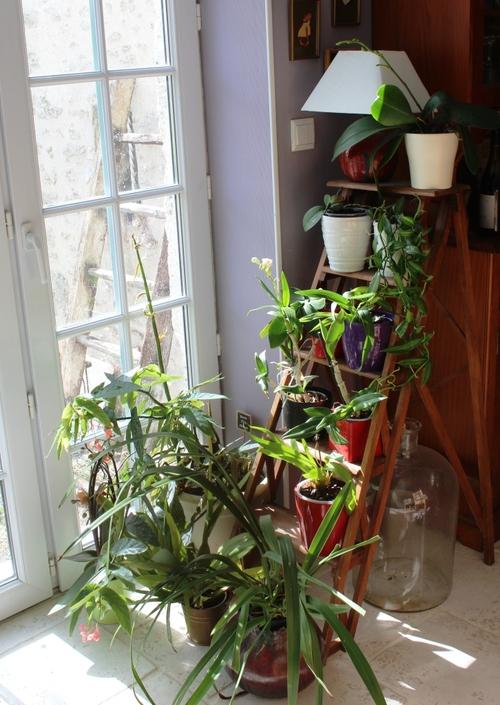 Soins et cultures des orchidées