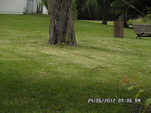 arbre-papillons--rond-point-et-herbe-001.JPG
