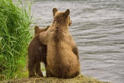 Une histoire d'ours