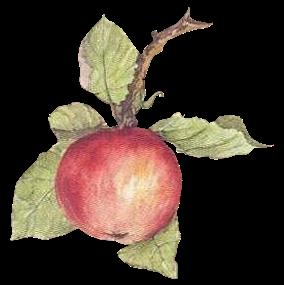 Tubes fruits
