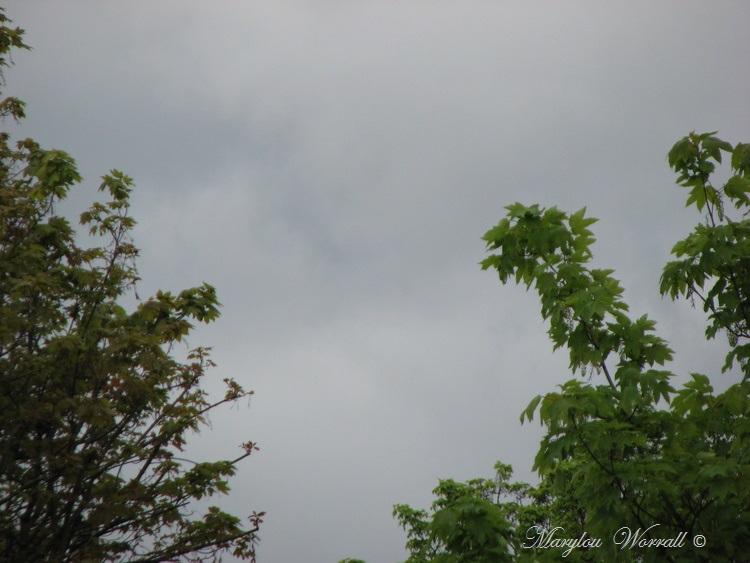 Ciel d'Alsace 315