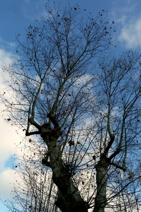 k05---arbre-5.JPG