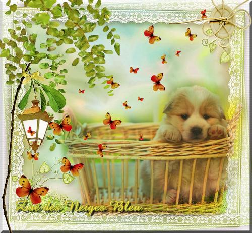 défi : Petit chien dans son panier