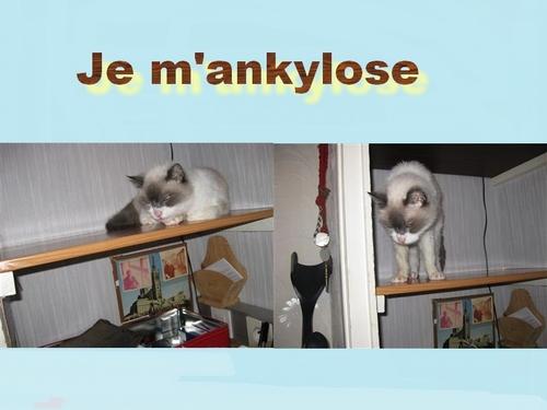 Ankyloser