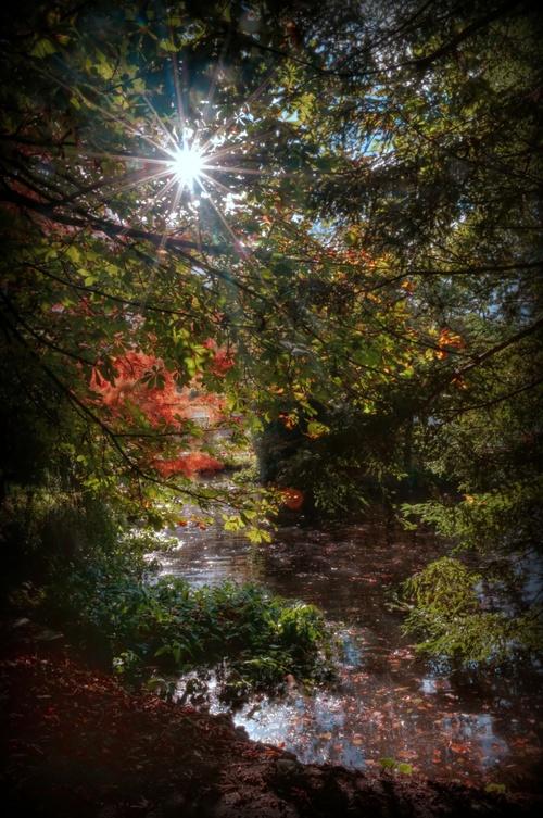 Soleil d automne.