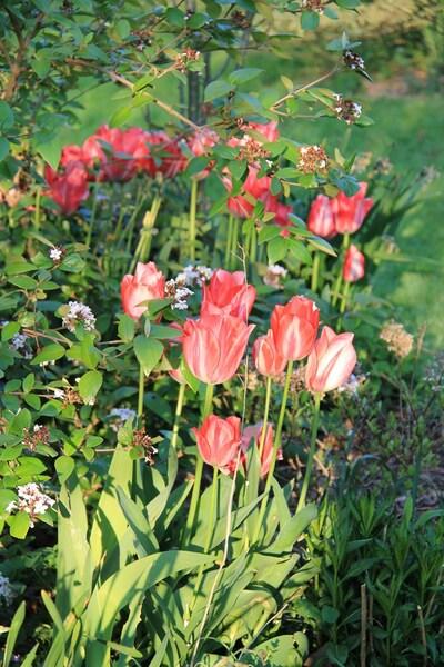Mai et ces fleurs