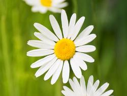 Les bienfaits de la flore