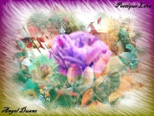 automne-d-une-rose-13-AD.JPG