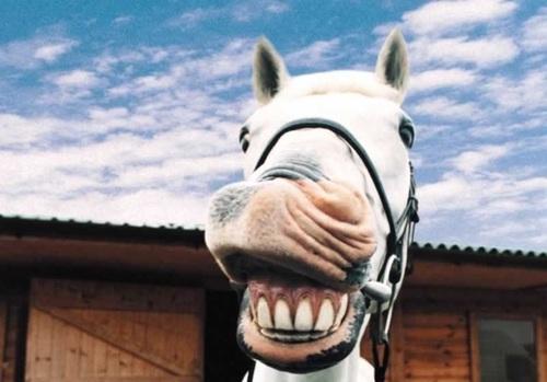 comment faire rire un cheval