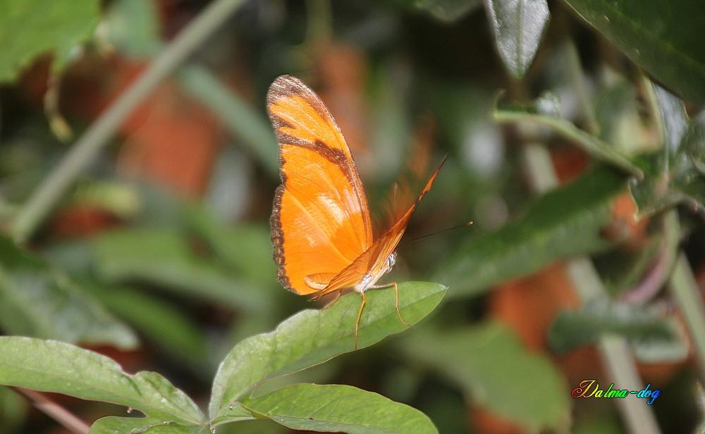 l'il aux papillon à Noirmoutier