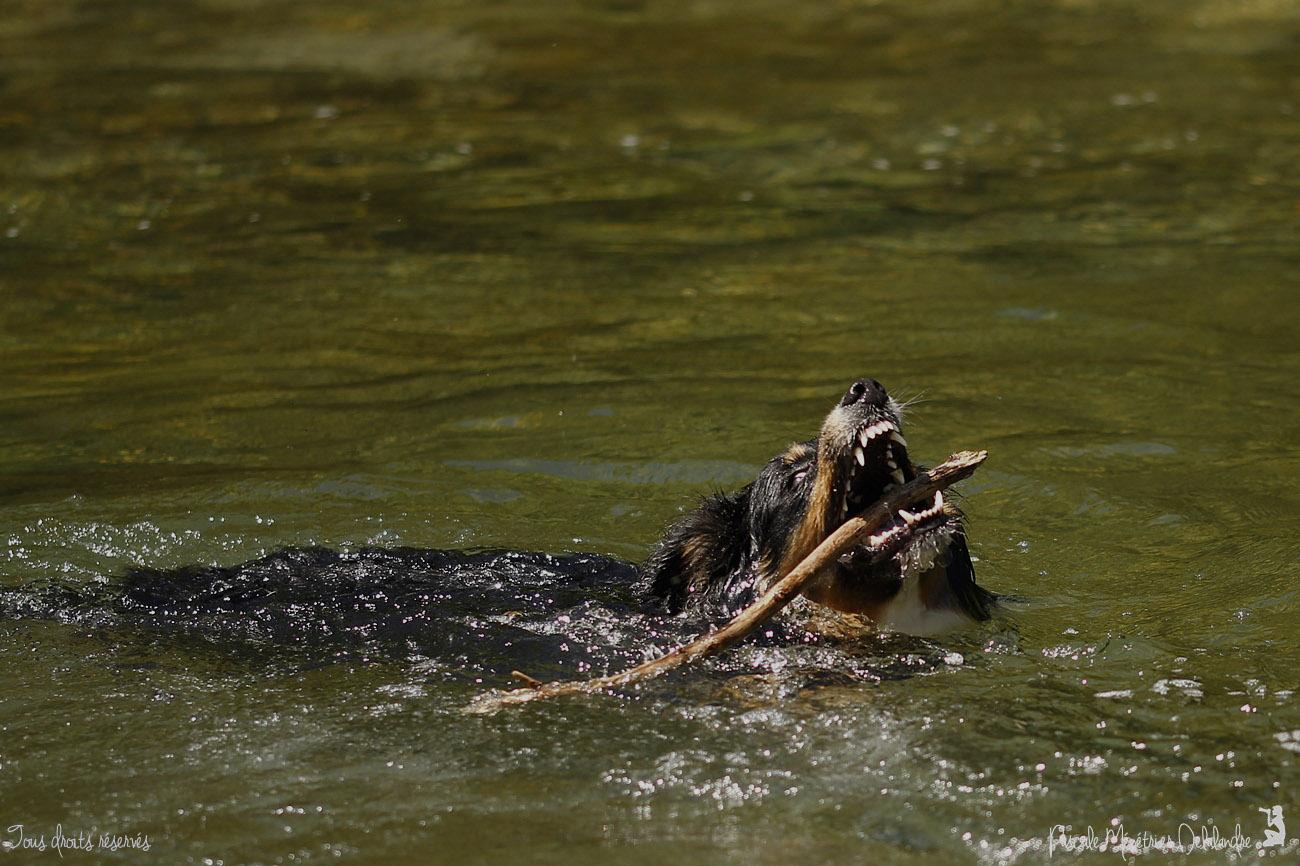 Un petit tour à la rivière pour Gampo